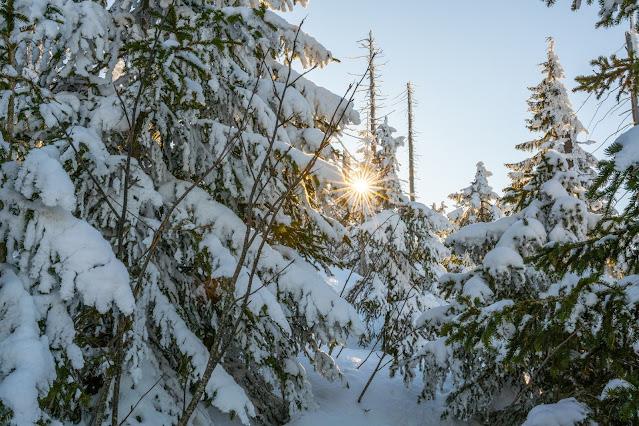 Wanderung auf den Lusen  Winterwandern im Nationalpark Bayerischer Wald 05