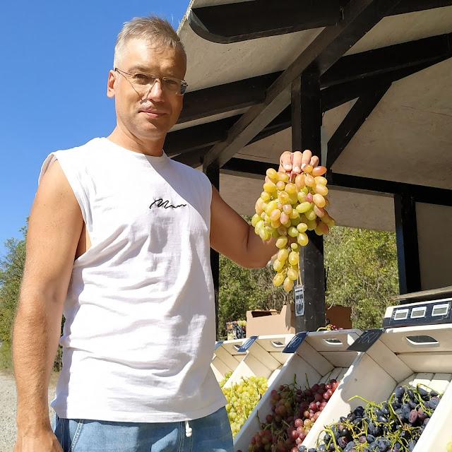 Виноград в солнечной долине