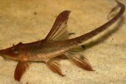 17 Arti Mimpi Makan Kotoran Ikan Menurut Primbon Jawa Terlengkap