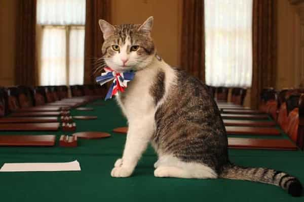 The resident pet cat at the English Head of state's office has his own elegant title