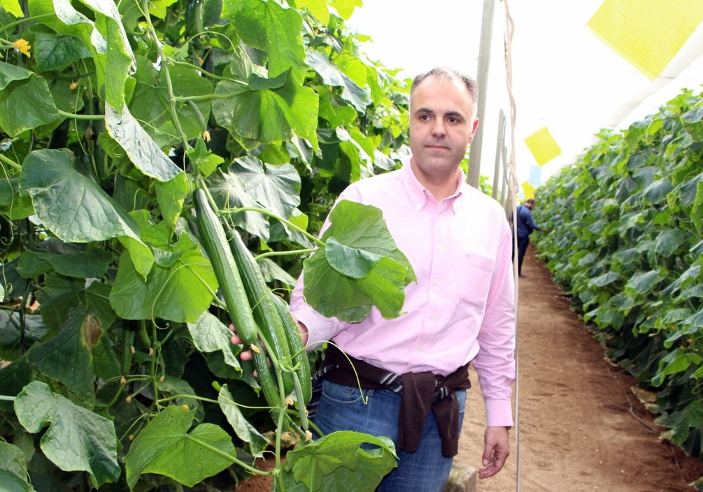 Thm tecnolog as de la horticultura mediterr nea - Variedades de berenjenas ...