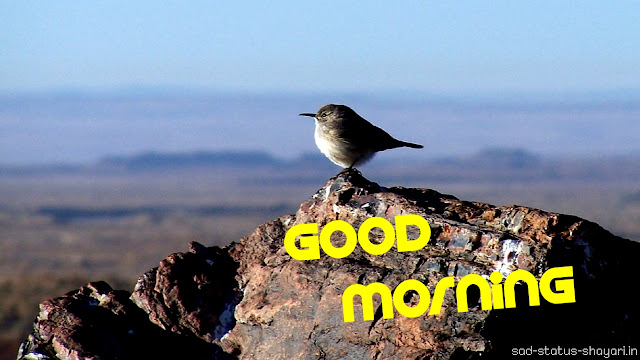 good morning images alone bird