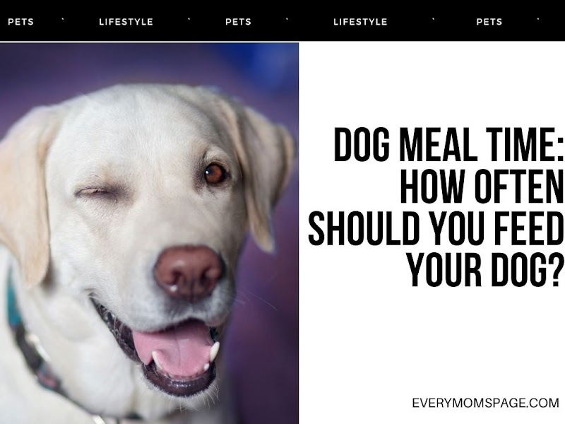 Dog Meal Time: How Often Should You Feed Your Dog?