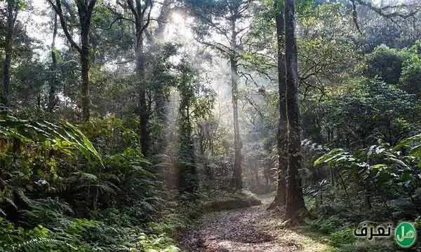 الغابات الاستوائية المطيرة