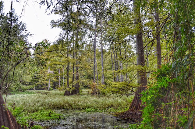 http://ibwos.blogspot.com/2015/09/across-pascagoula-otter-pond-and-beyond.html