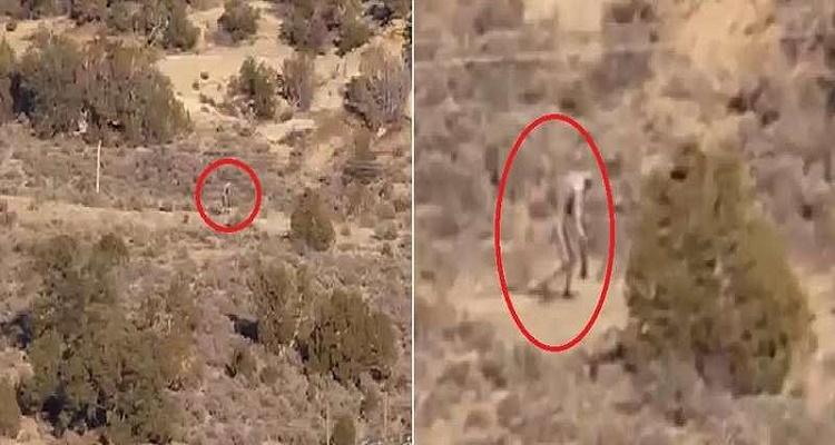 مخلوق غريب يتجول في صحراء البرتغال ( فيديو )
