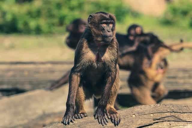مواعيد حديقة الحيوان بالجيزة يوم الجمعة  2020