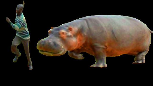 hippopatemus- العالم-أخطر حيوان