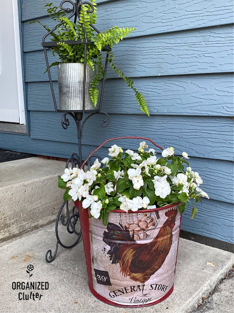 Photo of a rooster decor transfer on a red bucket used as an impatiens planter