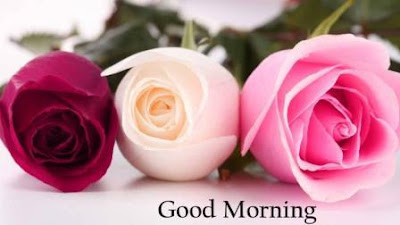 good morning images for lover with rose flowers