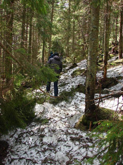 Снег в лесу на склоне Гургулата