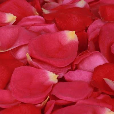 beautiful rose wallpaper  rose wallpaper blue rose wallpaper