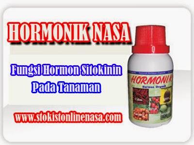 Fungsi Hormon Zpt Sitokinin Pada Tumbuhan Stokist