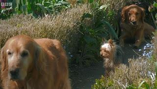 Nigel, Nell and Patti from Gardeners' World