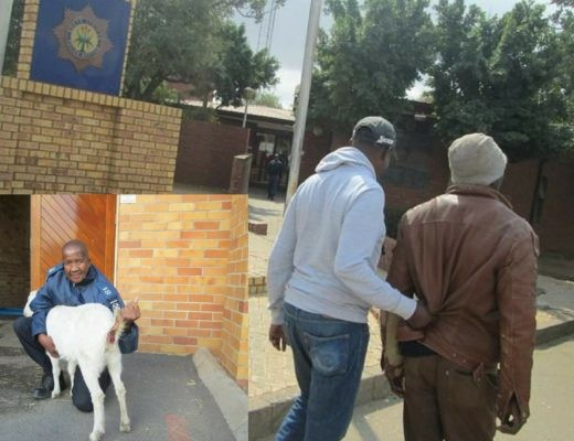 33-year-old man arrested for raping his neighbour's pregnant goat in South Africa