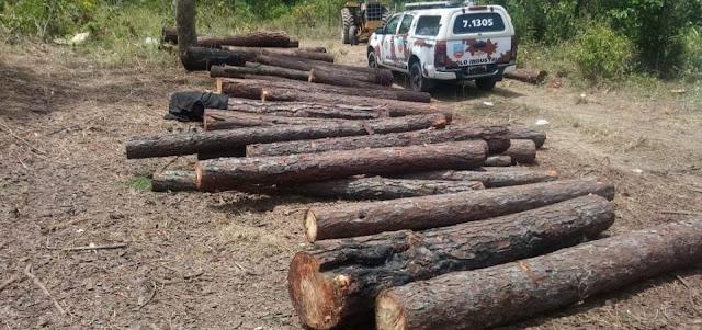 Onze pessoas são presas em flagrante por desmatamento em área de proteção ambiental na Bahia