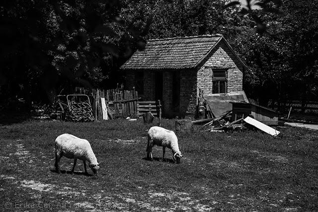 Velino Selo Bijeljina Bosnia