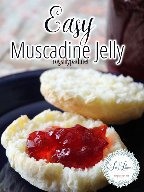 Easy Muscadine Jelly Recipe - you won't be disappointed!  frogslilypad.net