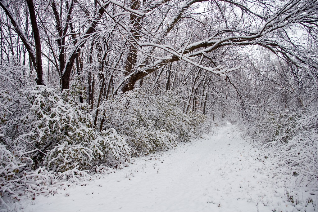 Five Places to See Snowfall in this Winter