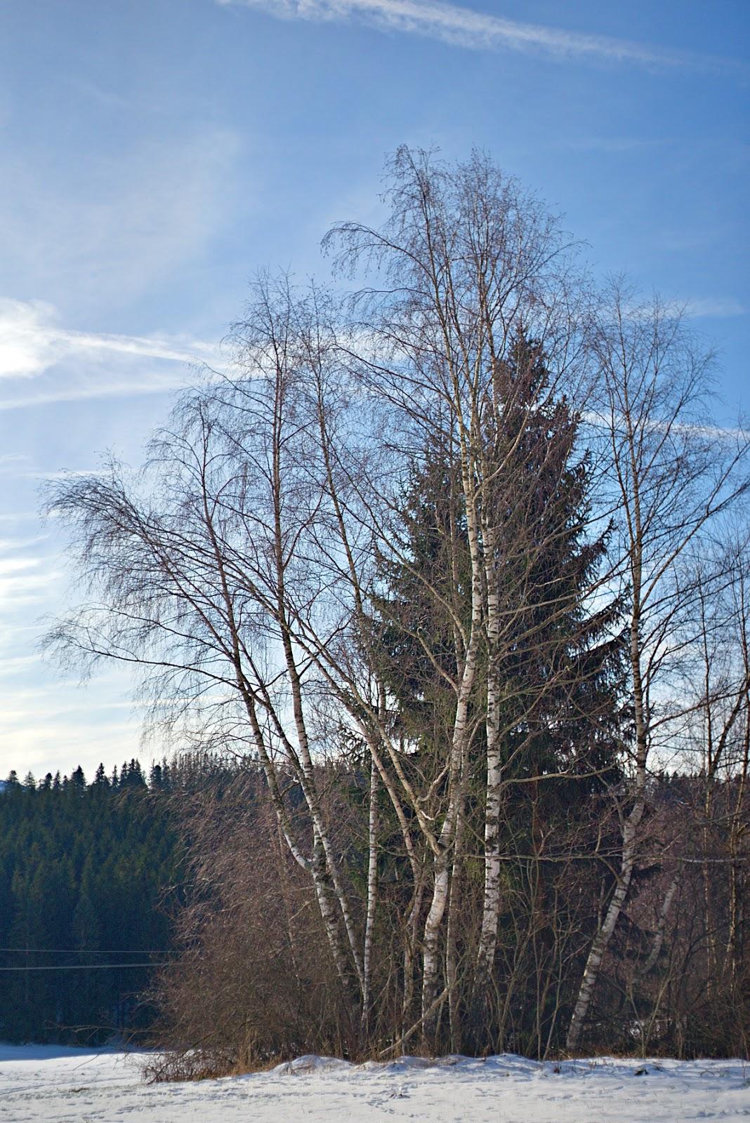 #049 Tessar f2.8 50mm – Schnee in Diepholz (2)
