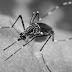 Sarangani on Dengue alert amid Covid-19