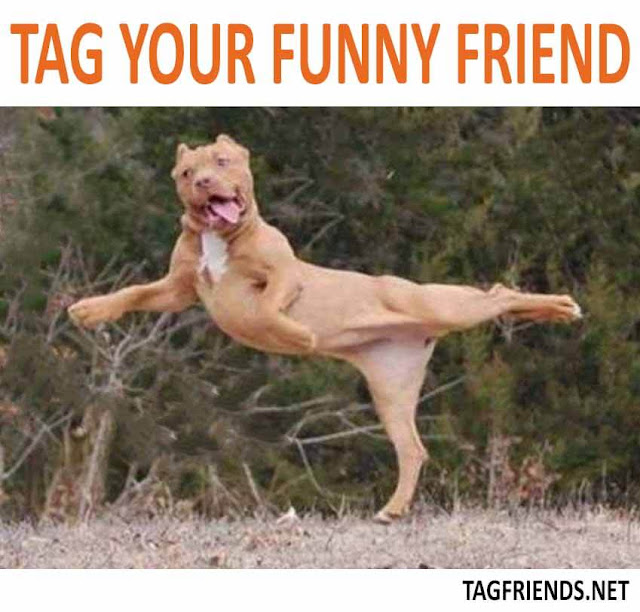 Tag your funny friend-tagfriends(dot)net