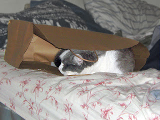 Spackle Puss (the cat) 18 (in a bag on a bed 2012)