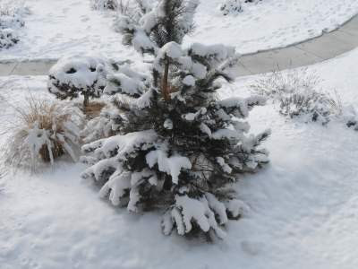 Snow, path, spiritual path, spiritual awakening, spiritual awakening symptoms