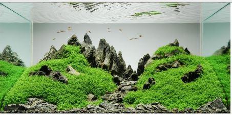 Penjelasan Mengenai Aquascape
