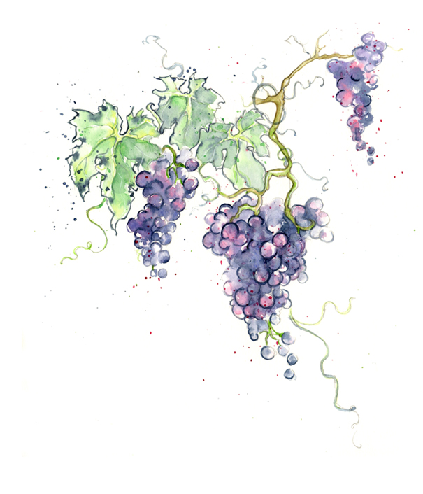 amy holliday illustration new fruits red amp green grapes