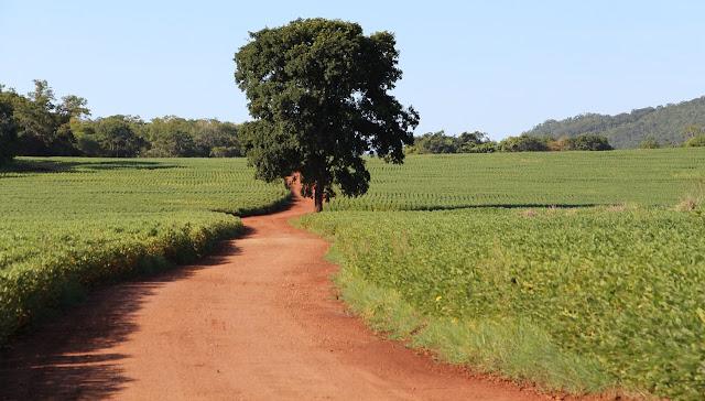 Peluang Usaha Agribisnis Pertanian