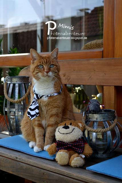 Katze Mimi hat sich mit einer Krawatte schick gemacht