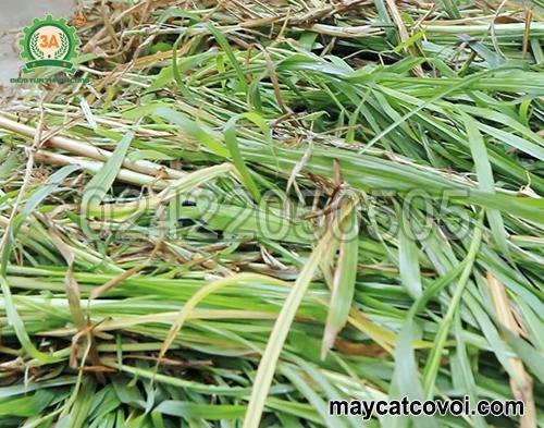 Nguyên liệu cho máy băm cỏ cho bò giá rẻ 3A2,2Kw