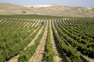 Bodega Inurrieta Ribera Alta wines