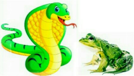 Selfishness of the enemy - the story of the snake and the frog