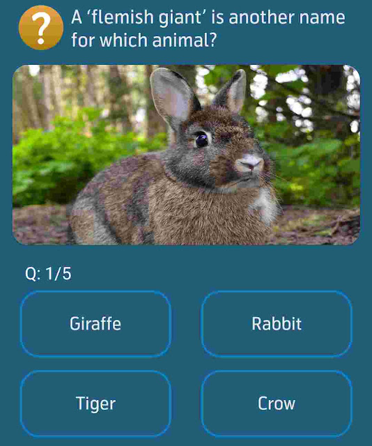 A flemish giant is another name for which animal?