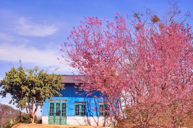 Chiêm ngưỡng vẻ đẹp tuyệt trần của vùng ngoại ô Đà Lạt 2