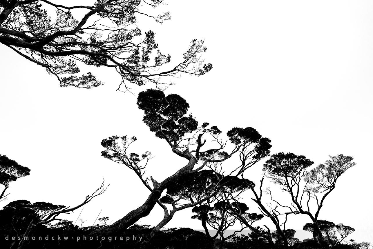 D E S M O N D C K W P H O T O G R A P H Y Mount Kinabalu