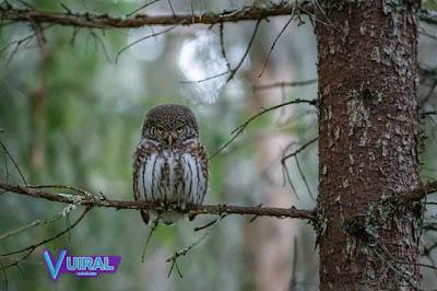 Contoh Simbiosis Mutualisme Petani Dengan Burung Hantu