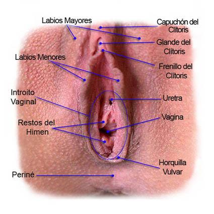 La vagina de la esposa del vecino 3