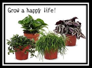 Foto van bloempotten met groene planten als voorbeeld van het Knutsels en Kadootjes blog. Photo of flowerpots with green plants as an example of the Knutsels en Kadootjes blog.