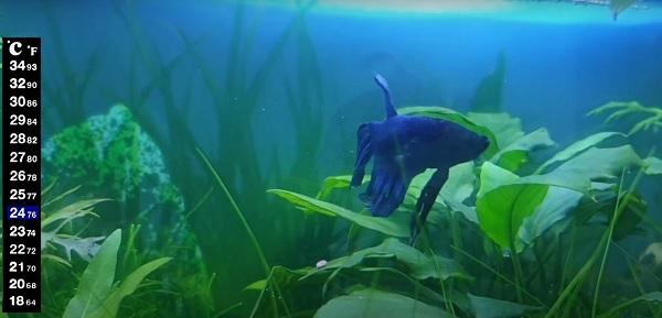 Betta fish tank with no heater