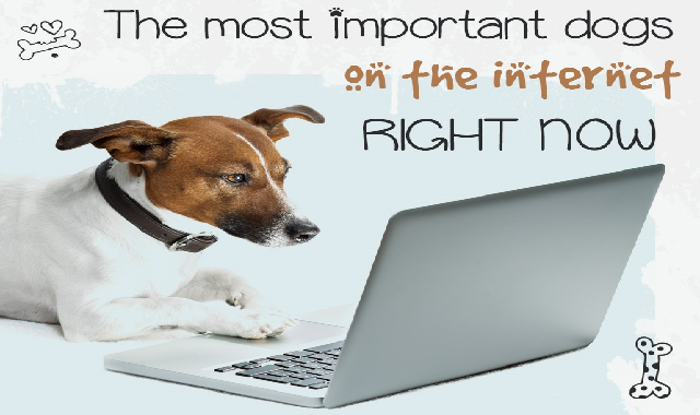 The most important dogs on the internet right now #infographic