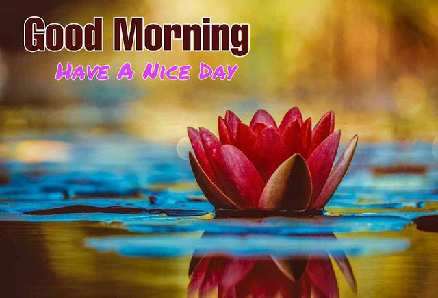 Good morning flower images free download hd