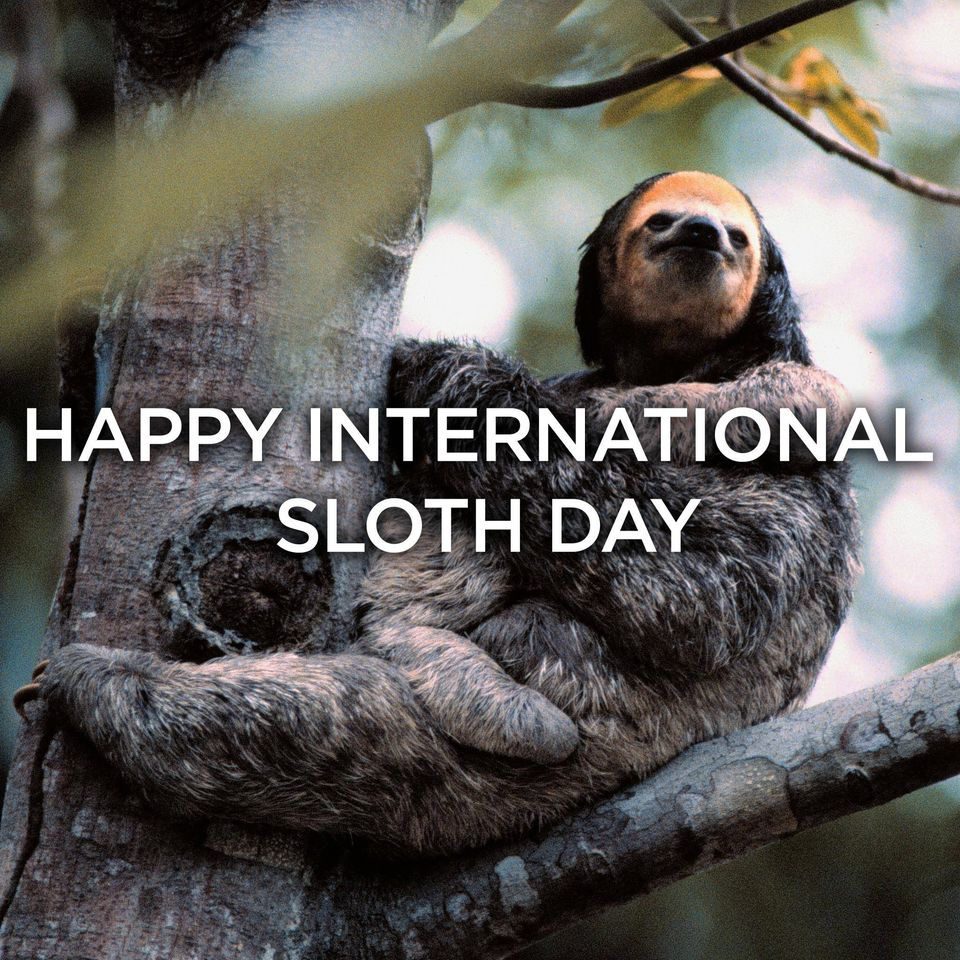International Sloth Day Wishes Images