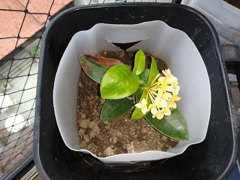 Minhas plantinhas queridas, por mim cultivadas!