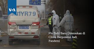 Corona belum Selesai, Muncul Virus Baru Flu Babi G4 , 4,4% Warga China sudah Terinfeksi