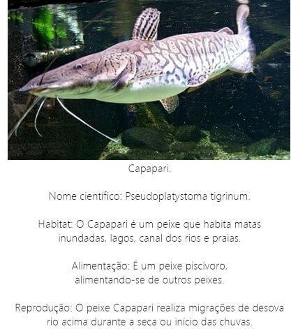 Peixe-Capapari