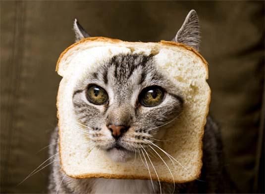 Czy kot może jeść chleb?