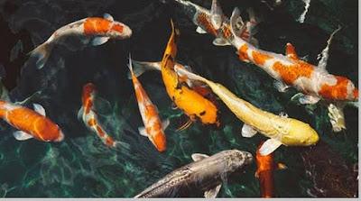 Ikan dan ciri - ciri ikan - berbagaireviews.com